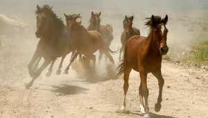أسباب خفية تسبب العرج لحصانك