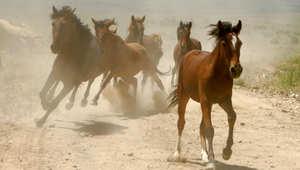 3 نصائح للسيطرة على حصانك من الأجسام الغريبة