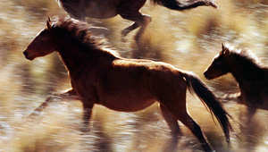 هل تعرف السبب من وراء تمرد الحصان على الفارس؟