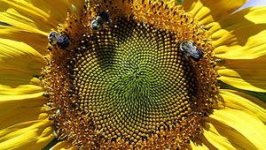 """ما هو """"العسل الخارق""""؟"""