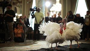 أحدث ضيوف البيت الأبيض.. ديوك رومية تنزل في فندق فاخر وتنتظر العفو الرئاسي!