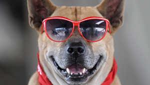 """وظيفة شاغرة في موقع """"Vine"""" .. مطلوب كلب ظريف ومتحمس"""