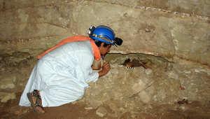 اكتشاف مومياوات 8 ملايين حيوان أغلبها من الكلاب بسراديب مصر الأثرية