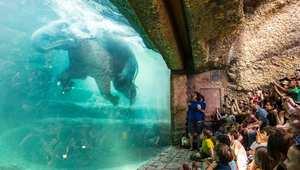 فيل يستحم في حديقة حيوانات زيوريخ في سويسرا.