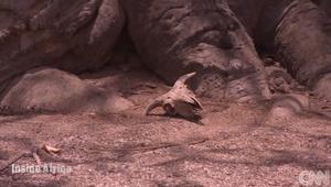 """جزيرة الثعابين في السينغال..حيث تطرد """"الأرواح"""" جميع البشر"""