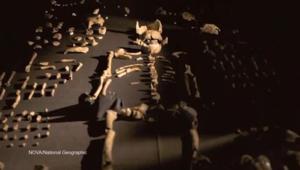 بالفيديو.. نوع جديد من الإنسان القديم.. إكتشاف قد يغير مفهوم التطور البشري