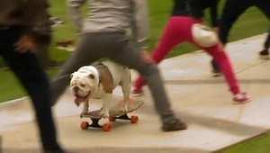 ent-171115-skateboarding-bulldog