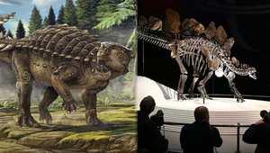 باحثون يكتشفون فصيلة جديدة للديناصورات بعد 26 عاماً من العثور على الهيكل العظمي