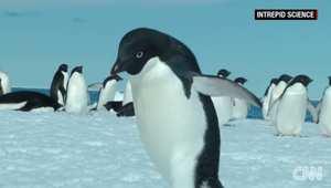 بالفيديو: جبل جليدي يقضي على آلاف طيور البطريق