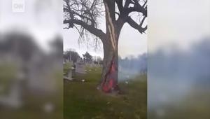 شاهد ماذا حدث لشجرة داخل مقبرة ضربتها صاعقة!