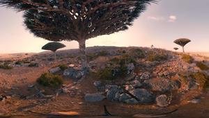بتقنية 360 درجة.. سافر إلى أرض أشجار دم العنقاء سقطرى