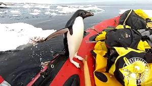 Australian Antarctic Program/twitter