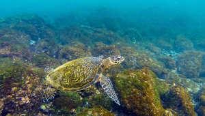 جزر غالاباغوس، الإكوادور