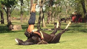 """تعاني من التوتر أو القلق؟ ننصحك ببعضٍ من """"يوغا الخيول""""!"""