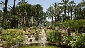 حديقة النخيل في إلش