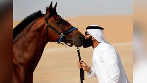 هكذا تحمي حصانك من الحروق وأشعة الشمس الحادة