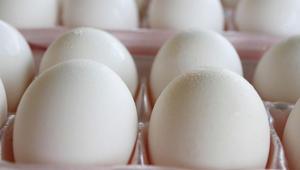 البيض النيء لا يشكل خطراً على الحوامل..في هذا البلد