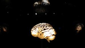 اكتشاف علمي جديد: وصول الدماغ سن الرشد غير مرتبط بالعمر