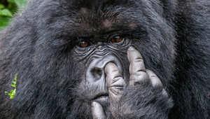 هذه الصور..تثبت حس الفكاهة القوي للحيوانات البرية