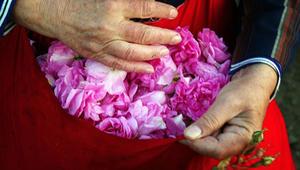 هذه التقنية تستخرج عطوراً من الأزهار لم نعرفها من قبل!