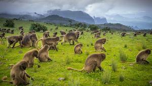 لهذه الأسباب... إثيوبيا قد تصبح أهم وجهة سياحية في أفريقيا