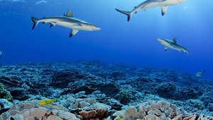 محمية جزر بيتكيرن البحرية (إقليم بريطانيا الخارجي)