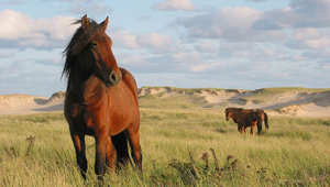 كيف تساعد حصانك على التأقلم في حظيرته الجديدة؟