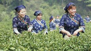 حيث أفضل شاي وأجمل حرير.. تعرف إلى هانغزو