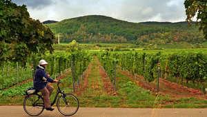 """هذا هو """"طريق النبيذ"""" الأشهر في ألمانيا"""