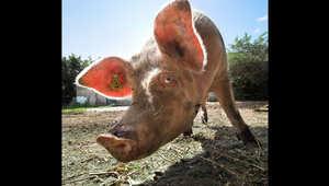 صور تدعو للنظر بدقة.. الإنسانية في عالم الحيوانات