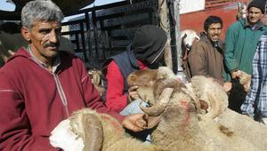 عيد الأضحى والدخول المدرسي يفاقمان معاناة أسر الدخل المحدود بالمغرب