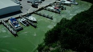 شاهد..انتشار طحالب سامة يهدد بتخريب شواطىء فلوريدا