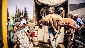 البطل العالمي بدر هاري يتبرّع بأضاحي العيد لفائدة أسر مغربية معوزة