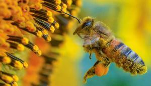 مزارع من غزة: العمل مع النحل يمدني بطاقة إيجابية