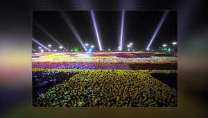أكبر سجادة ورد في العالم سعودية