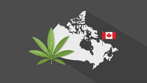 كندا قد تجني المليارات من قطاع الماريجوانا
