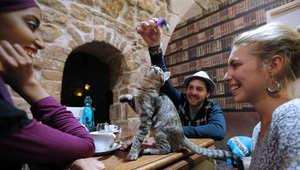 مقهى القطط في نيويورك