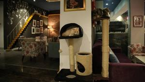 إذا كنت مقيما في ليبيا و من عشاق القطط والقهوة، فلا بد لك من زيارة مقهى خاص هناك