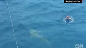 شاهد.. رجل يسبح قرب سمكة قرش من دون علمه