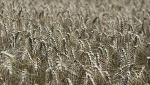 سترفع أسعار المنتجات الغذائية محاصيل زراعية