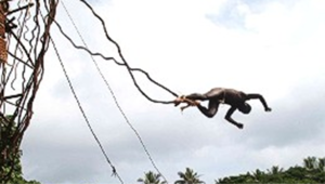 """قفزة """"تحدي الموت"""" على طريقة فانواتو"""
