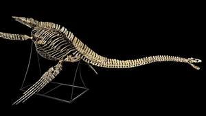 بعد نجاحه في إيقاف المزاد بفرنسا.. المغرب مطالب بدفع مقابل لاستعادة هيكل ديناصور يخصه