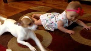 كلب يعلم طفلة الحبو