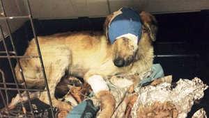 الكلب بعد علاجه