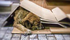 جثة كلب تتسبب في عطش مئات الأسر بمدينة تلمسان