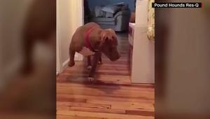 شاهد.. كلب يتسلل على رؤوس أصابعه خوفاً من الهر