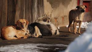 """القضاء الإسباني يدين سيدة """"قتلت"""" ألفيْ كلب وقط بالحبس أربع سنوات"""