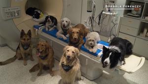 مفاجأة: الكلاب تفهم فعلا بعض كلمات البشر