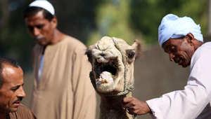 مشاهد من احتفال المسلمين بعيد الأضحى في مشارق الأرض ومغاربها