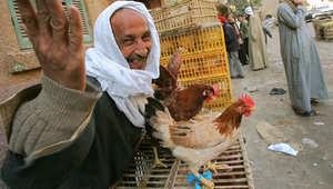 """ذعر """"أنفلونزا الطيور"""" يتجدد بمصر ورصد 370 """"بؤرة إصابة"""""""